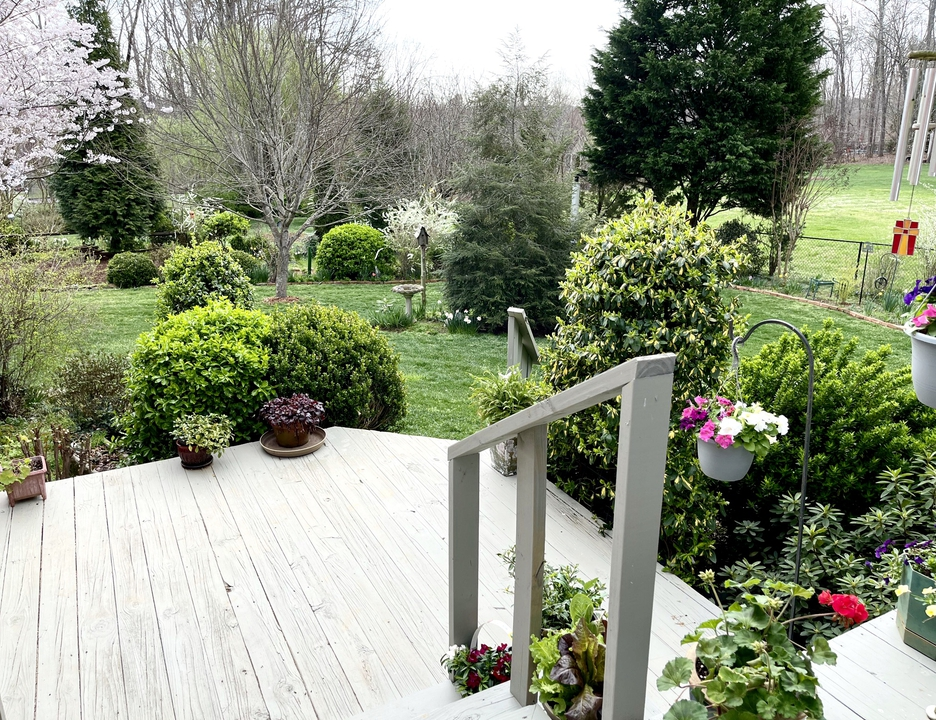 Early spring blooms