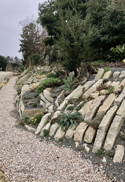 Crevice Garden with Agave