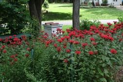 Bee Hive Garden in the Summer