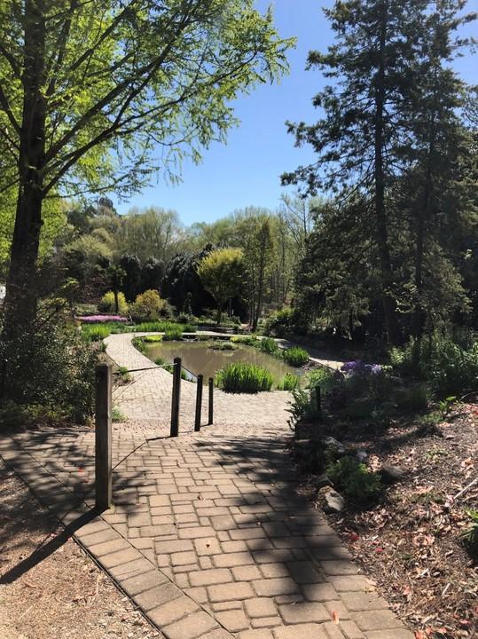Sunken Pond Garden/ Rain Garden in spring
