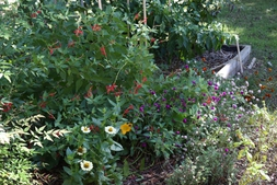 Front pollinator area and cedar bed in fall 2019