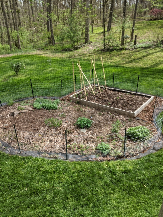 Garden in late March 2020