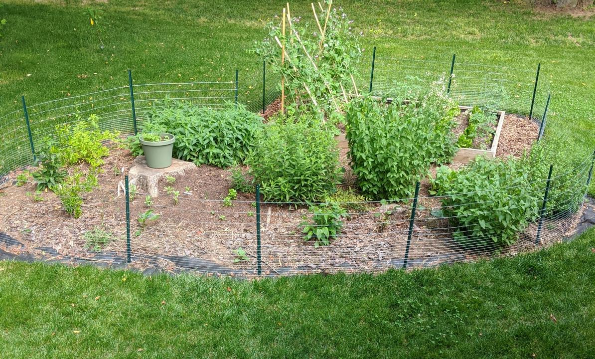 Garden in May 2020