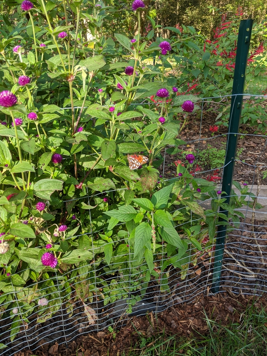 Front pollinator area October 2020