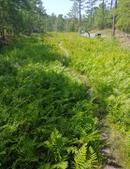 stanley rehder carnivorous plant garden