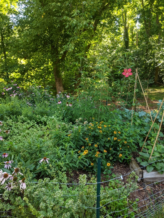 Garden in July 2021