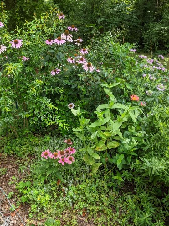 Left side of garden in June 2020