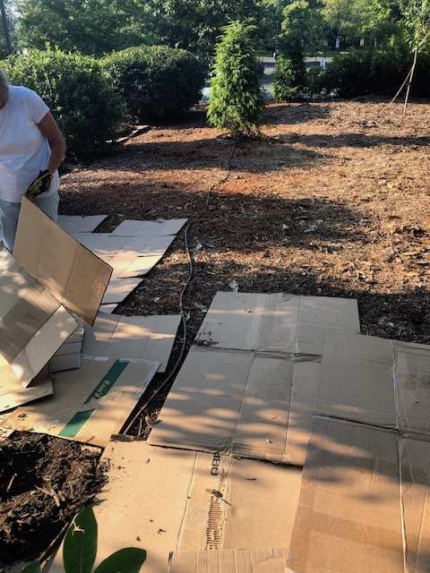 Cardboard laid out across the ground