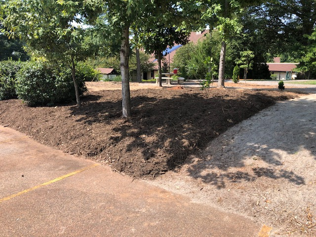 Mulch around trees bordered by a parking lot and gravel path