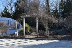 Muscadine Bed