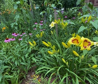 Daylilies  and more