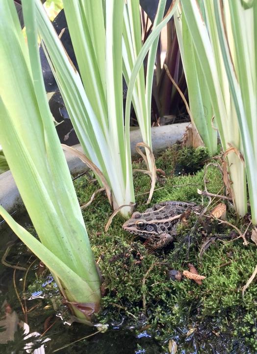 Frog on moss