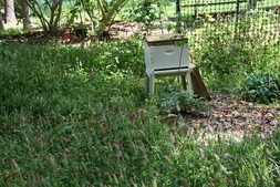 Bee Hive Garden in the Spring