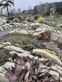 Crevice Garden