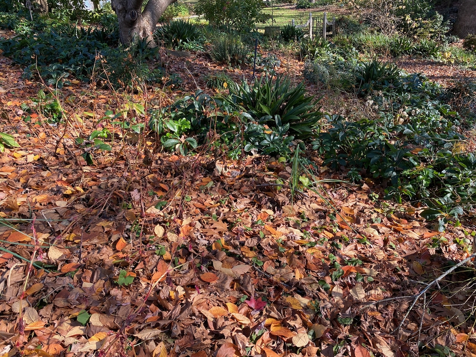 Late fall, some plants are evergreen