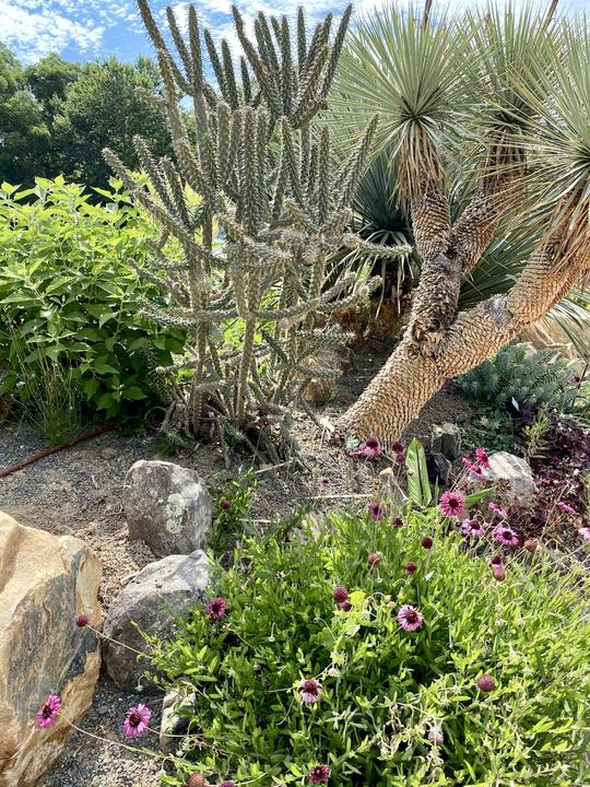 Sun loving plants