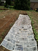 Newspaper for weed control