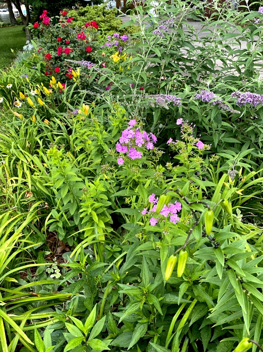 Butterfly bush bed