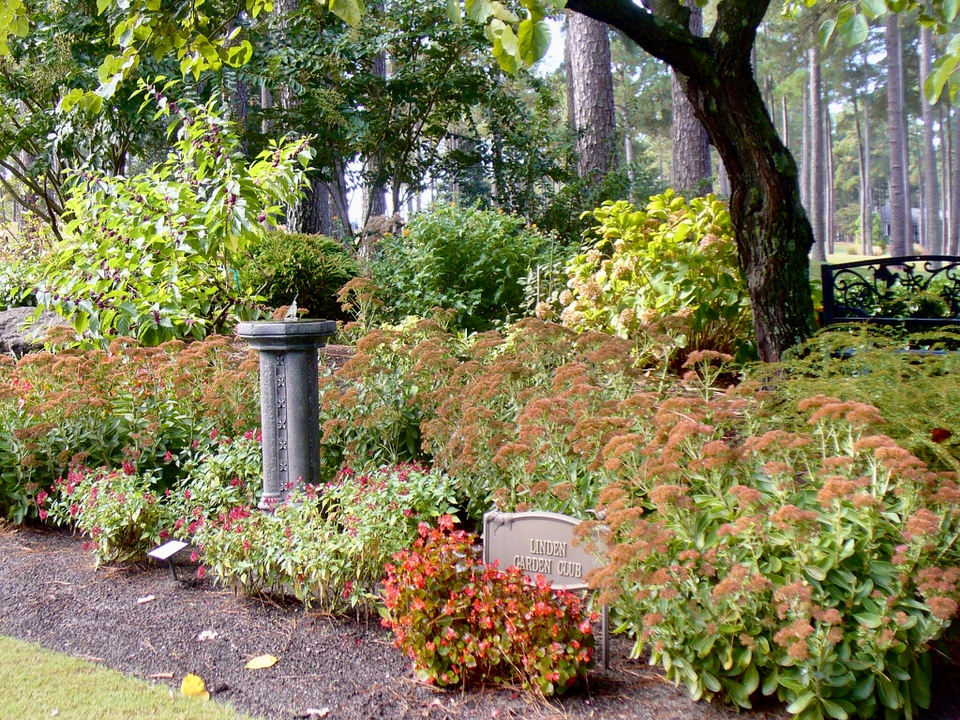 Showy seed heads on Autumn Joy Sedum