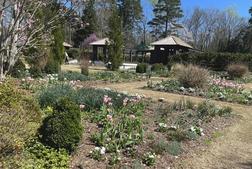 Reynolda Garden's pink & white garden