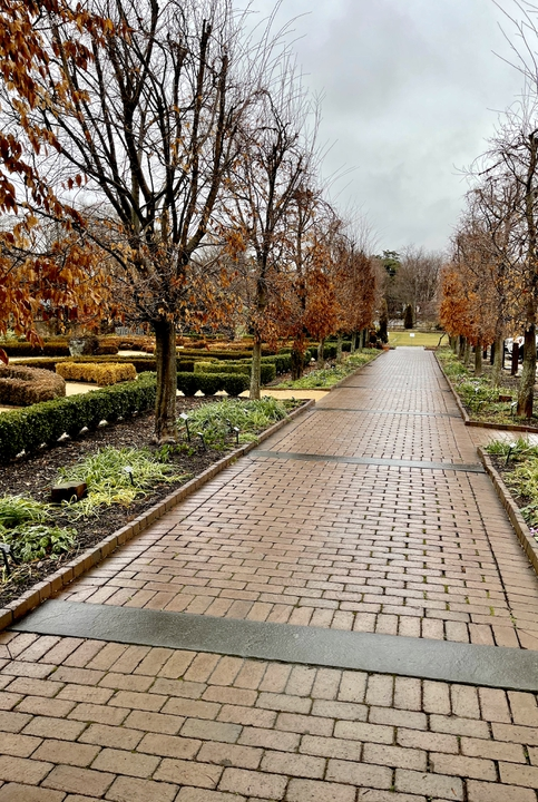 Hornbeam walkway