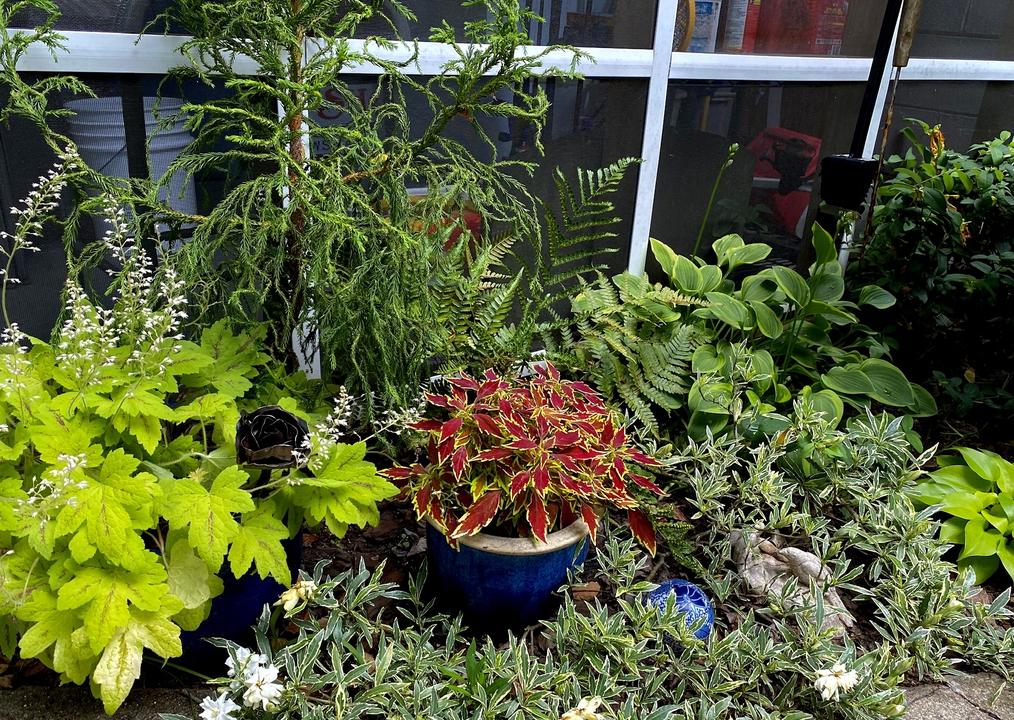 Colorful plant combination