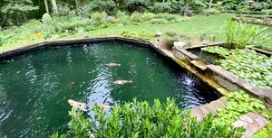 Large koi pond