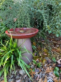 Late fall bird bath
