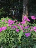 Backyard Respite Landscape in the Summer