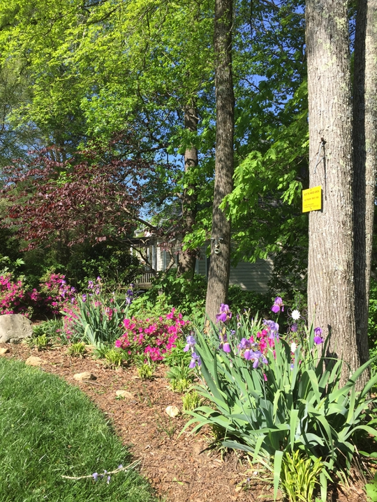 Backyard Respite Landscape