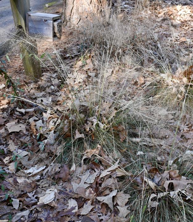 Crowder Park Prairie and Native Plants Garden in the Winter