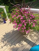 Container Garden on Deck in the Summer