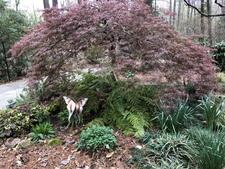 Part shade garden