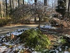 Corner garden in winter