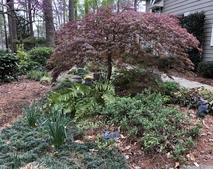 Corner garden side view
