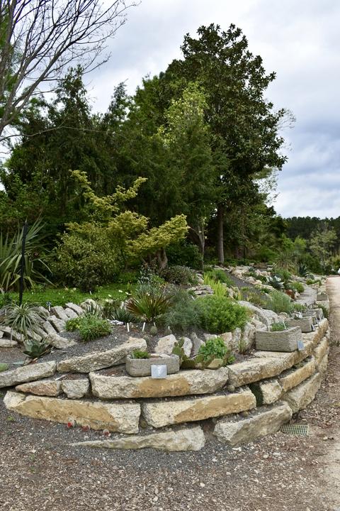 Photograph F: Crevice Garden in April