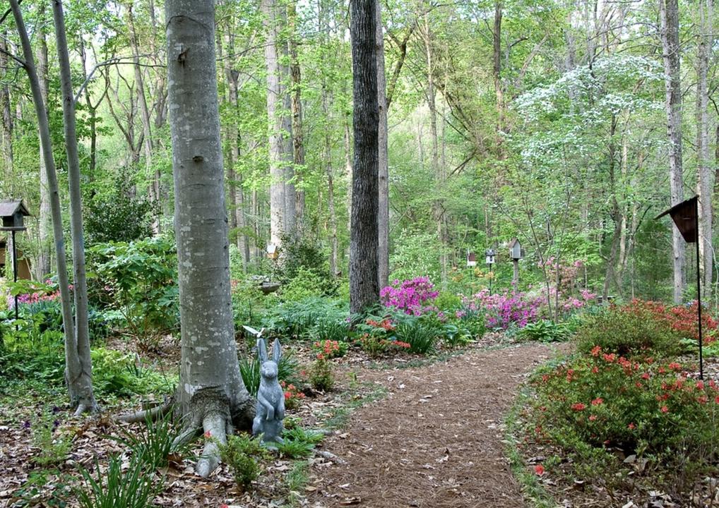 Spring magic in the garden