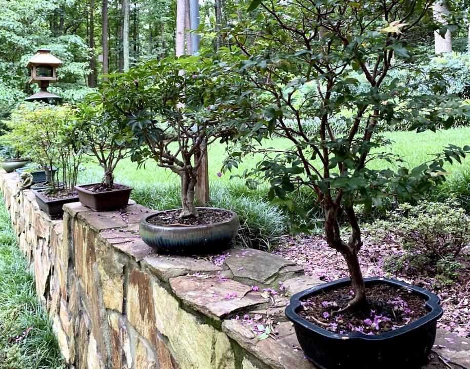 Bonsai trees displayed on stone wall