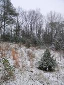West Meadow