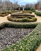 Winter view of boxwood