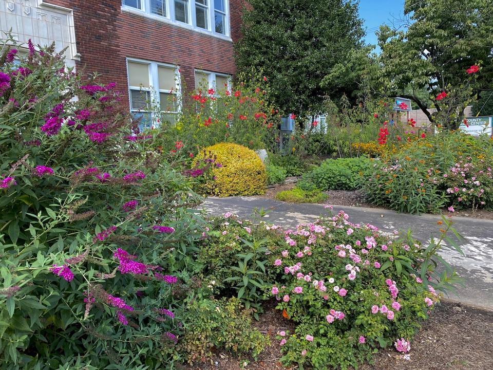 Mid summer pollinator flowers
