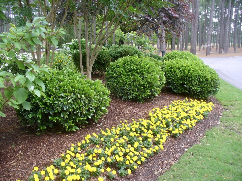 Yellow marigolds pop in landscape