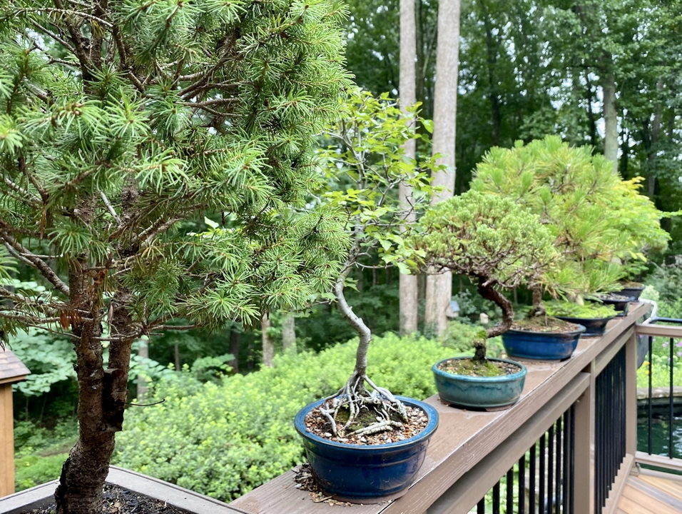 Bonsai plants displayed on railing