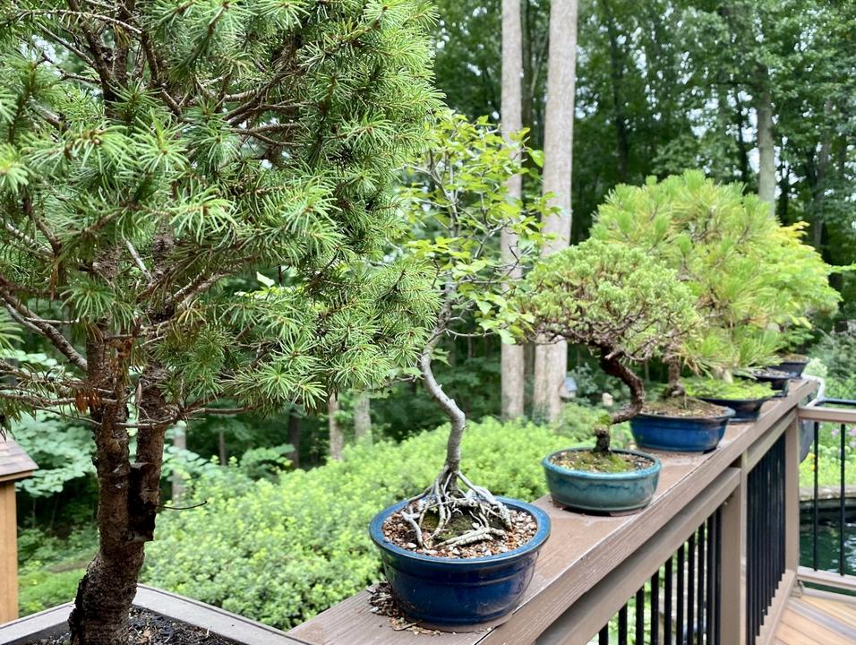 Bonsai plants displayed on railing