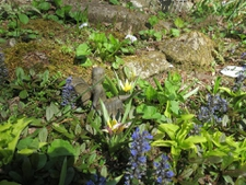 A fairy lurks in this just awakening garden in early spring.