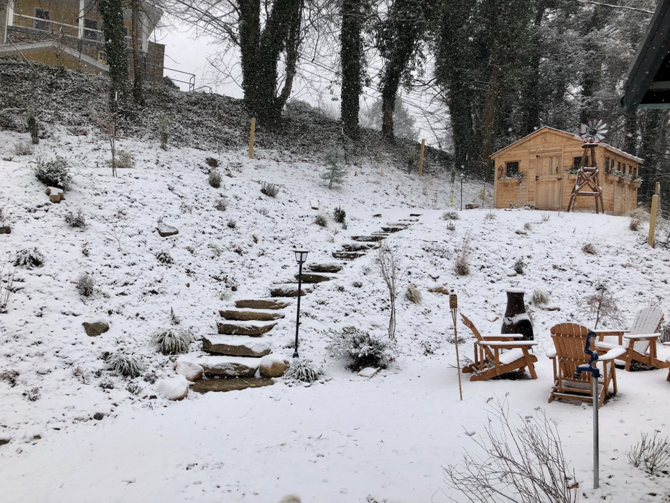 A Young Garden Covered In Snow