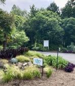 Juniper Level Botanic Gardens in Spring