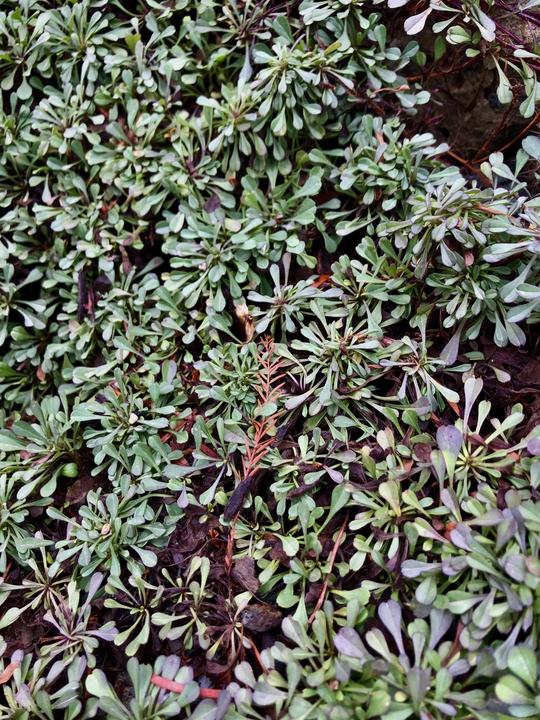 Photograph E: Crevice Garden