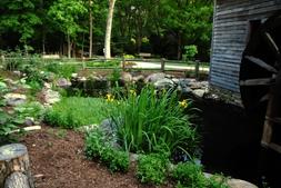 Irises bloom in the Greensboro Botanical water garden