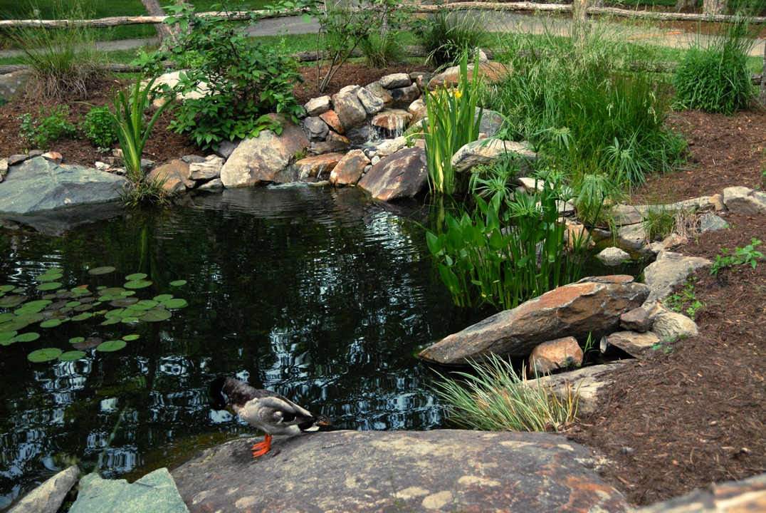 various aquatic plants around a pond as part of a water garden